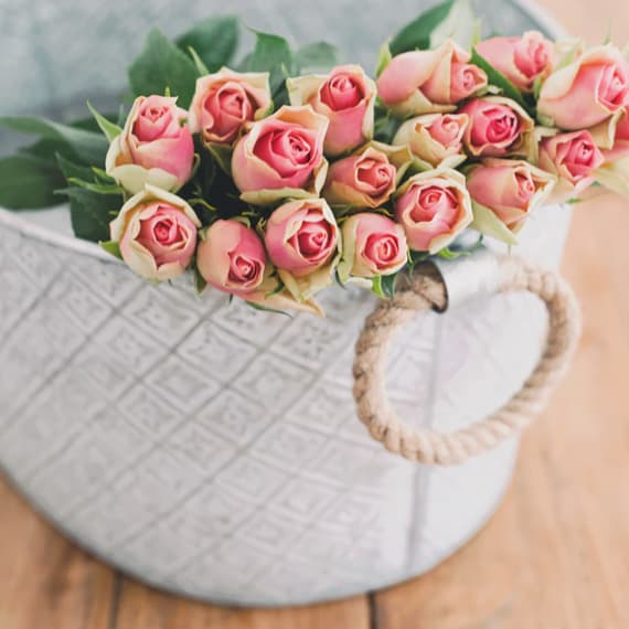 pink roses in a white pot