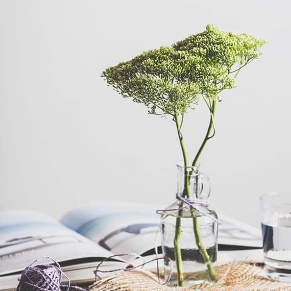 green plant in a jar