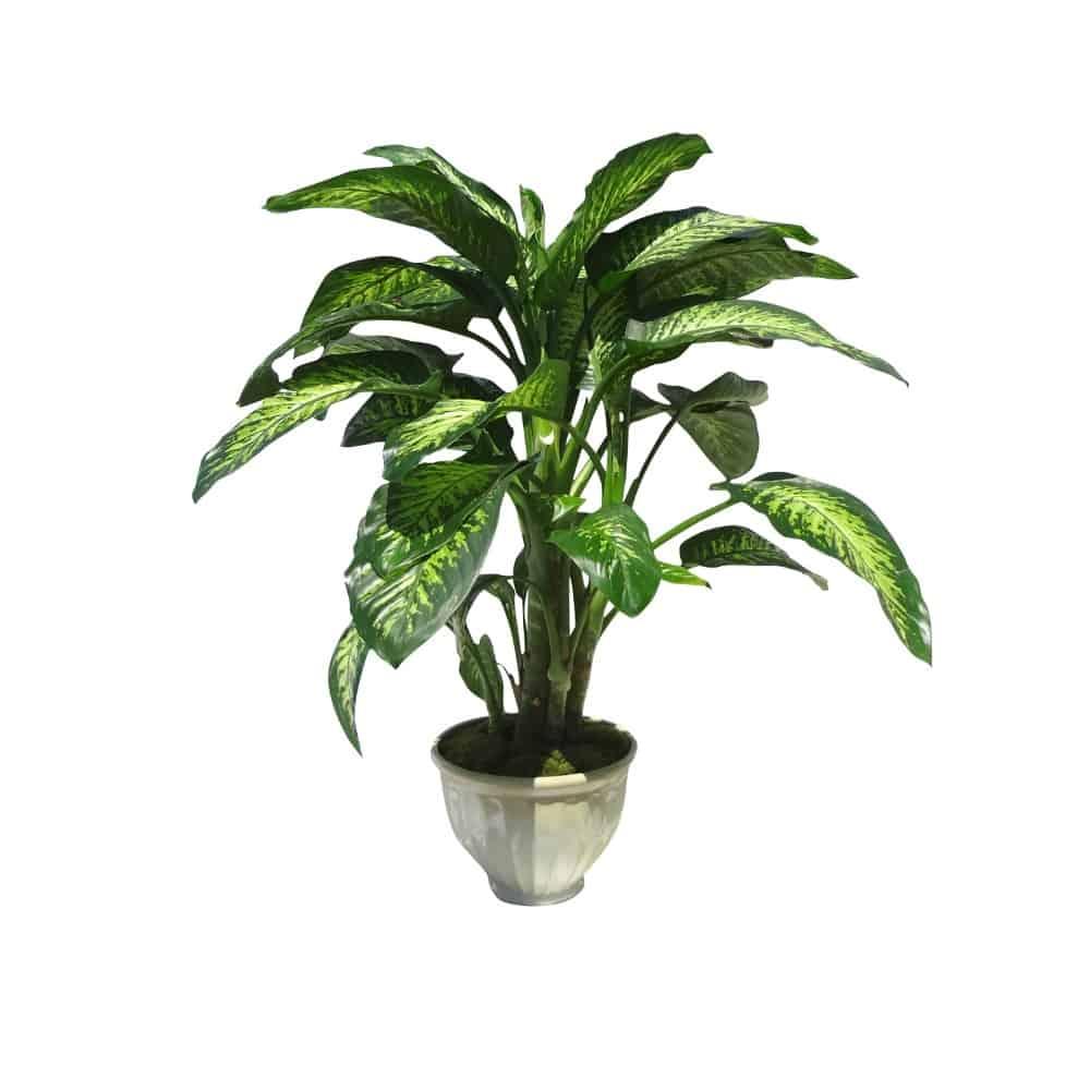 Green in a ceramic pot