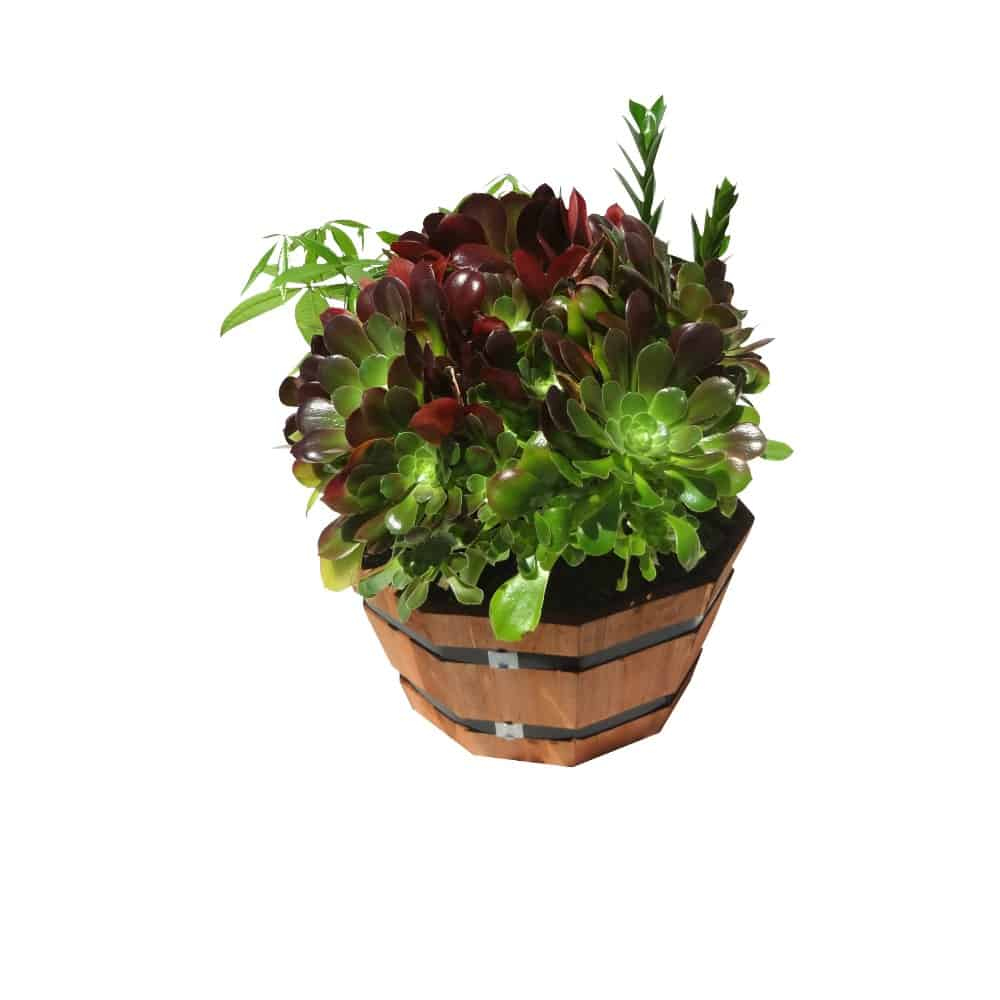Multiple green plants in an octagon pot