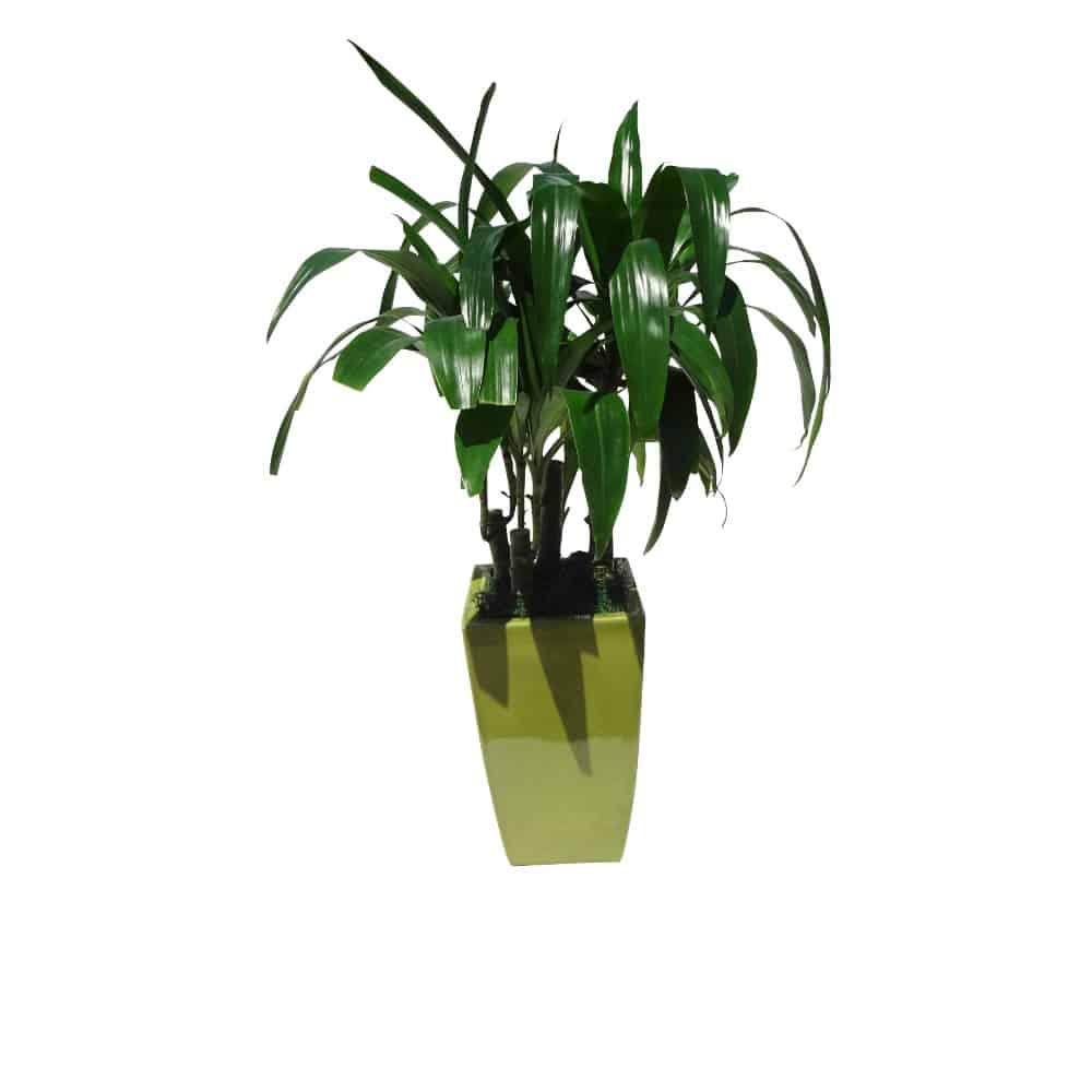 Green plant in a ceramic green tall pot