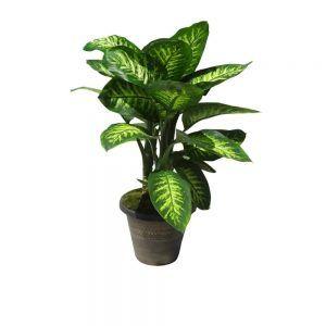 Green plant in a ceramic pot