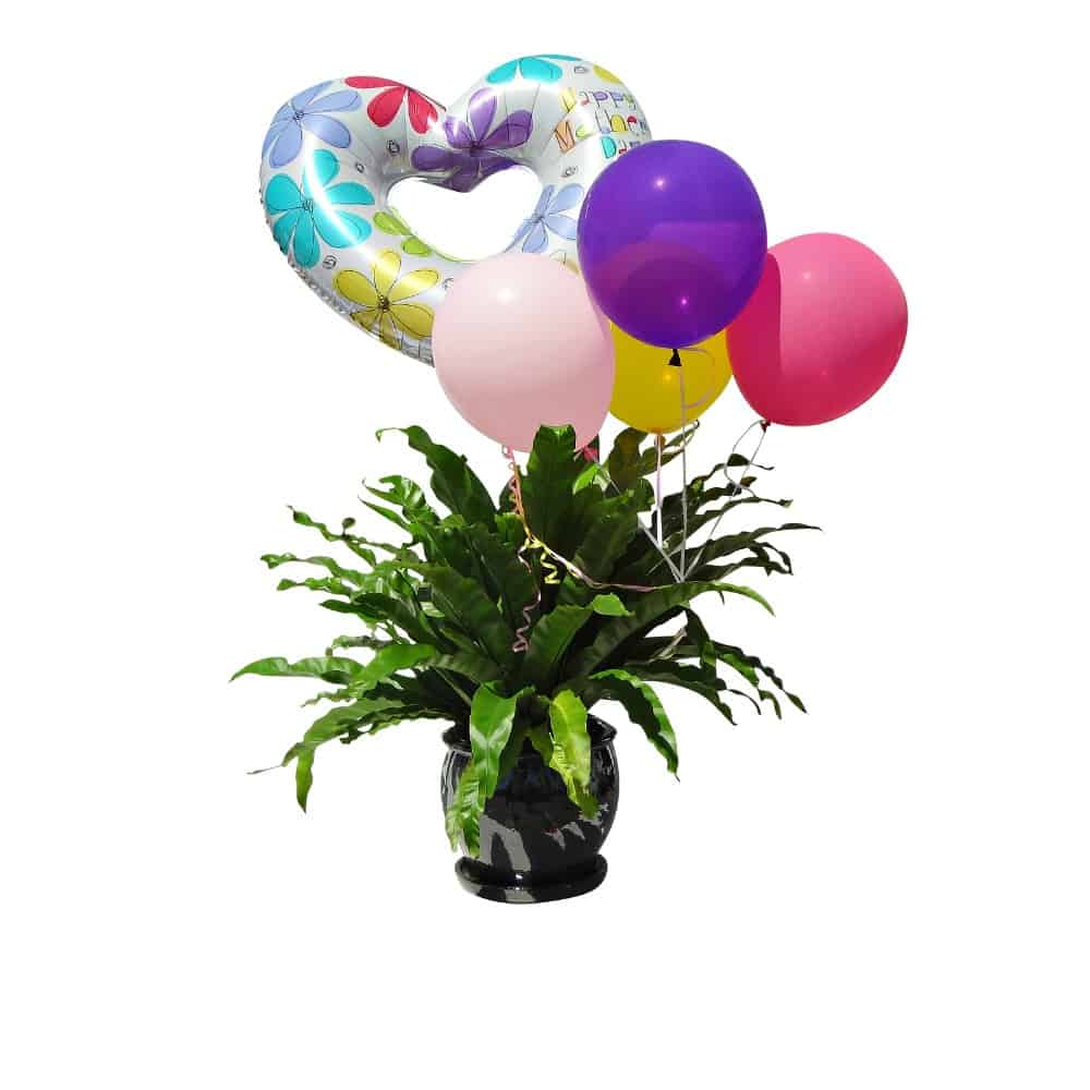 Green plant in a ceramic pot with 4 multicolor balloons and one hearth shaped balloon