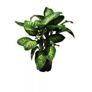 Green plant in a plastic pot