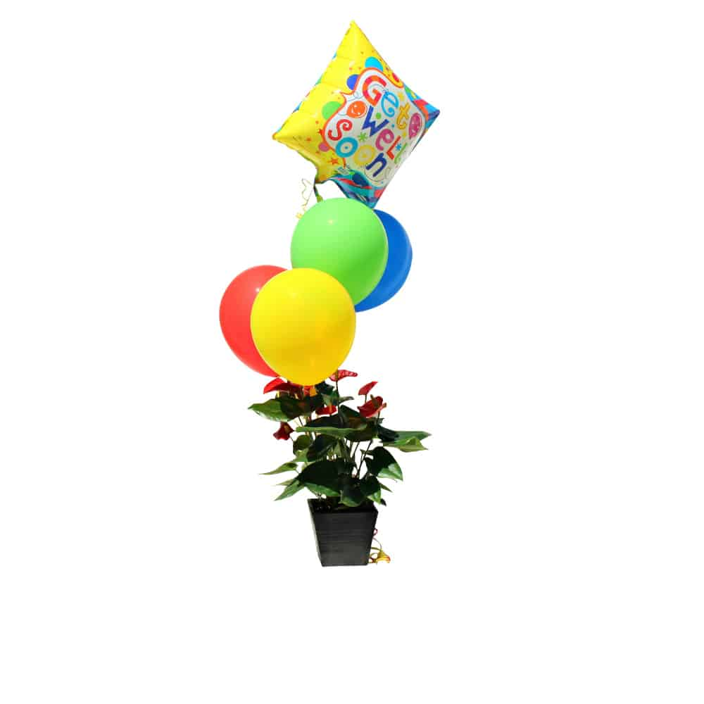 Green plant in a black pot with red flowers four multicolor balloons and a Get Well Soon balloon