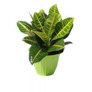 Green plant green pot