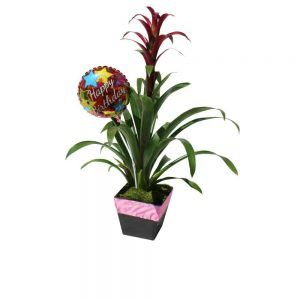Green plant in a black wood pot with a red flower and a balloon of Happy Birthday
