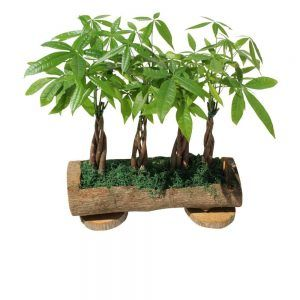 4 green plants inside a pot log