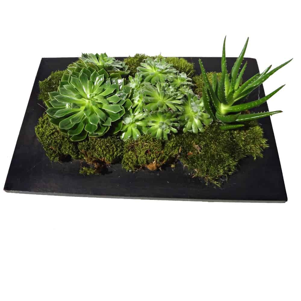 Variety of Green plants in a black rectangular wood pot