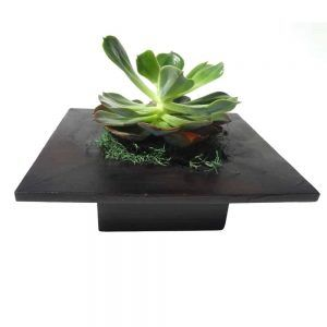 Green plant in a black wood pot