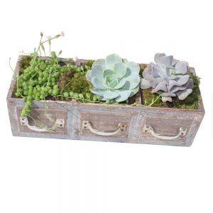 3 green plants in a rectangular wood pot