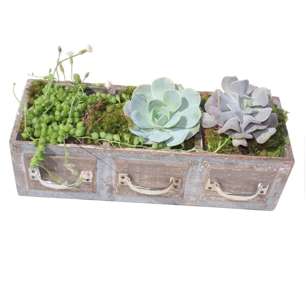 3 green plants in a rectangular wood pot