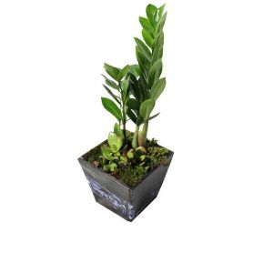 Green plant in a wood pot