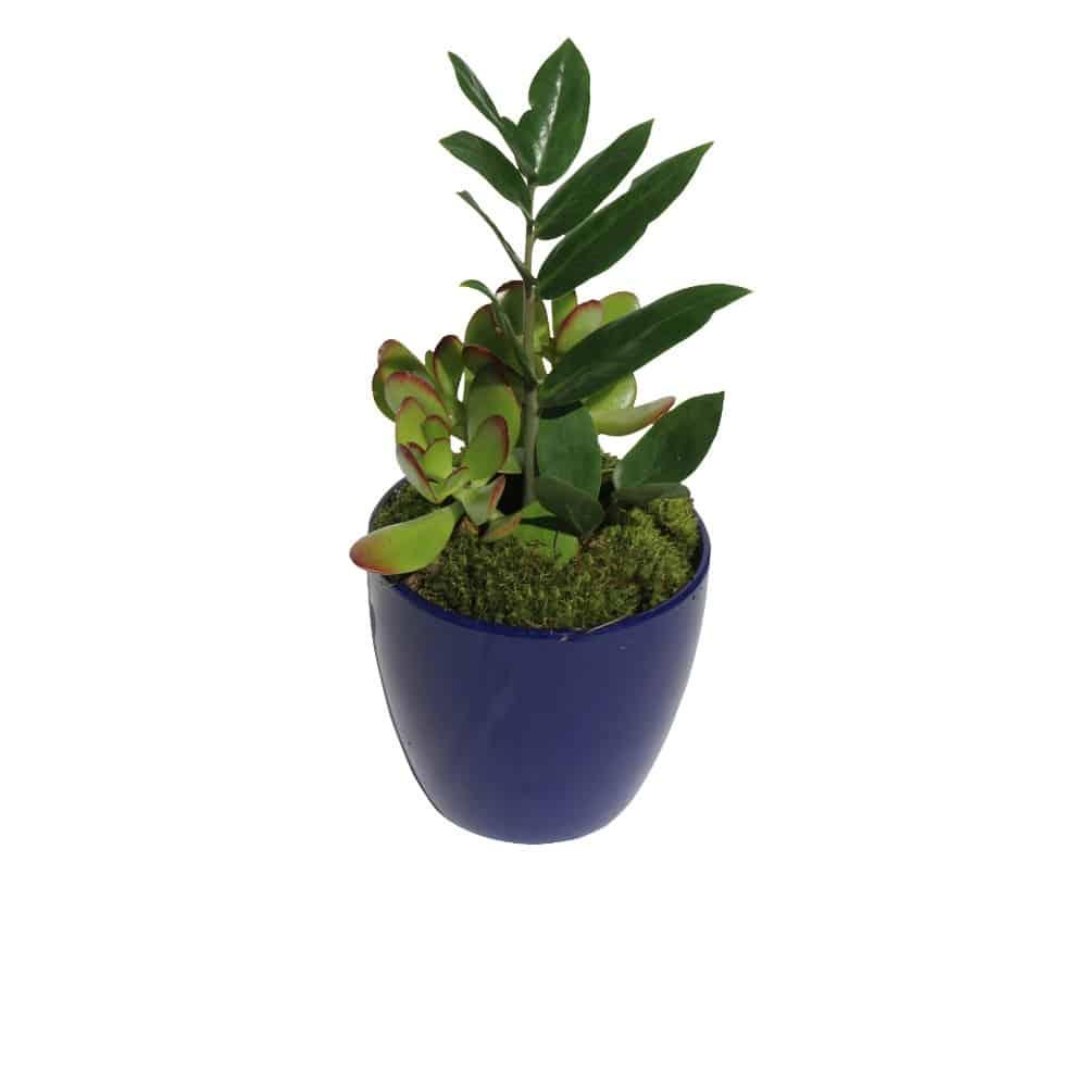 Green plant in a blue ceramic pot