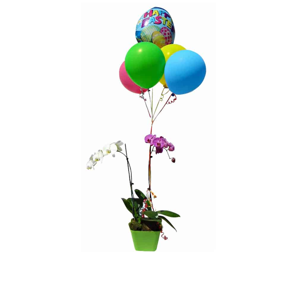 white and pink orchids in a green pot with 5 balloons