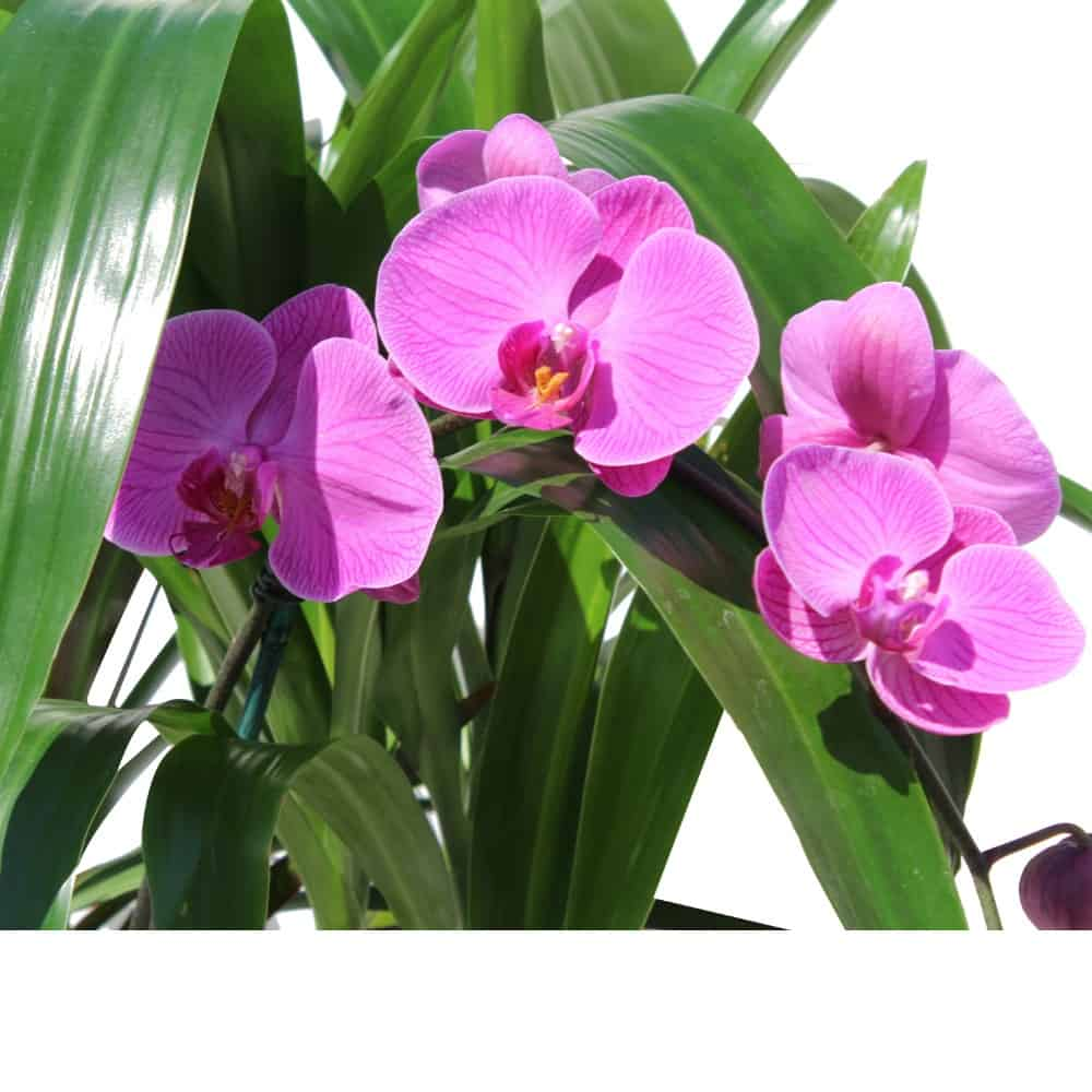 pink orchids with green plants