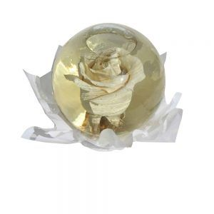 White rose inside a spheric bubble of glass filled out with water