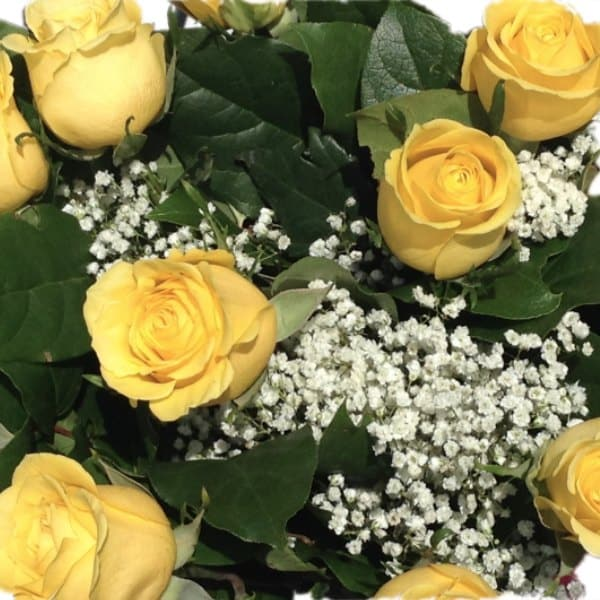 yellow roses gallery