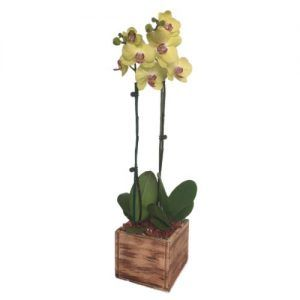 Yellow orchids in a square wood base