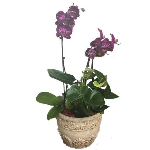 Purple orchids in a base